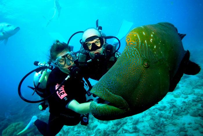 Можно просто прогуляться и познакомиться с морскими обитателями. | Фото: australiaeducation.ru.