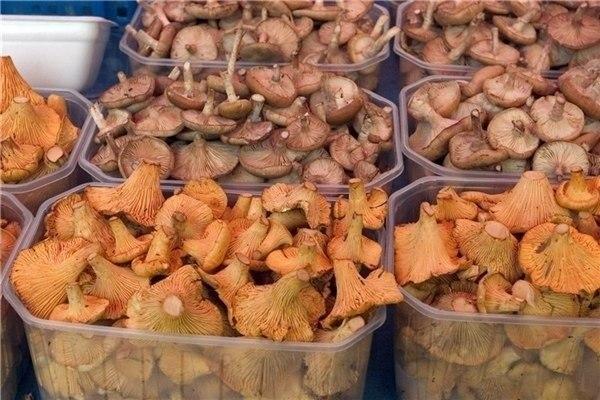 ЗДРАВОТДЕЛ. Лечение грибами