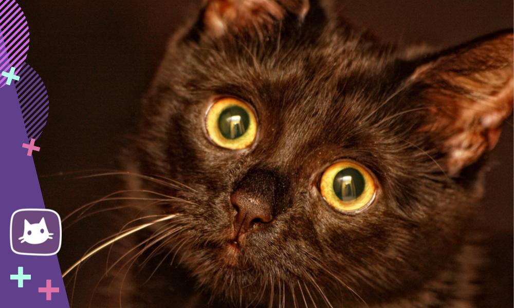 Как выбрать породу кошки для дома и для души