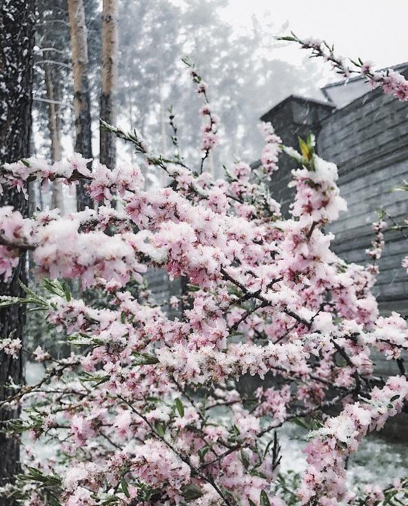 Заморозки в Новосибирскемогут продлиться до 19 мая