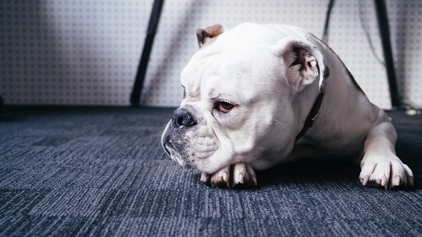 В Ленобласти приняли в третьем чтении законопроект о штрафах за неправильное содержание животных
