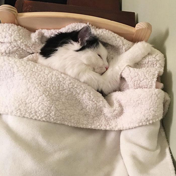 Фото кошки спят на кровати