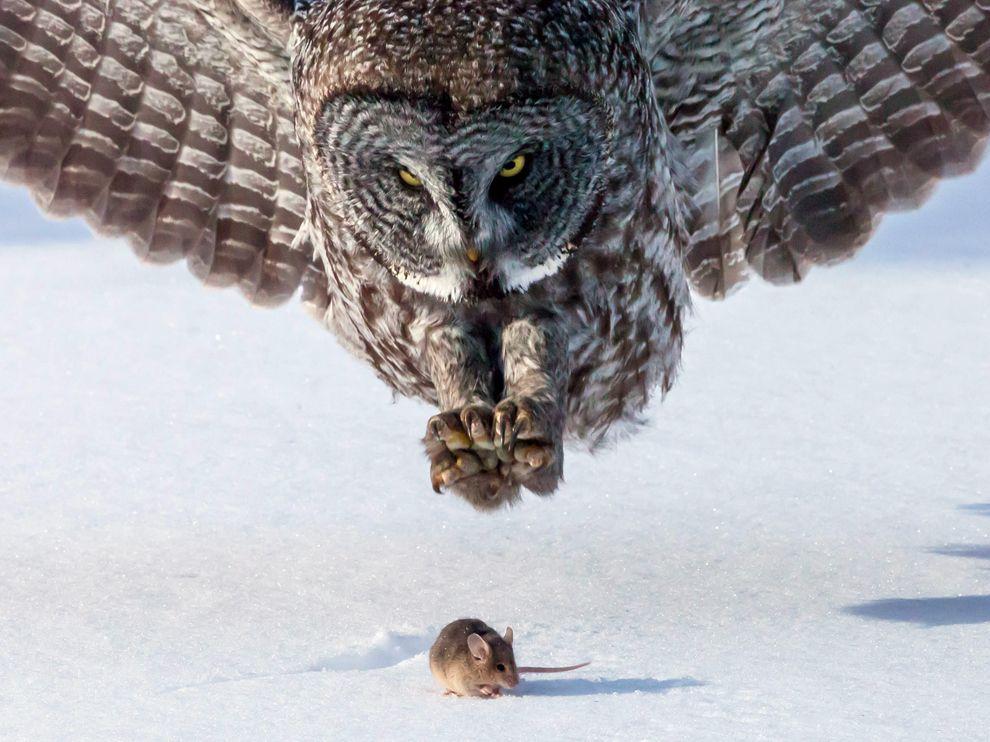 Лучшие фотографии прошедшего месяца по версии журнала National Geographic.