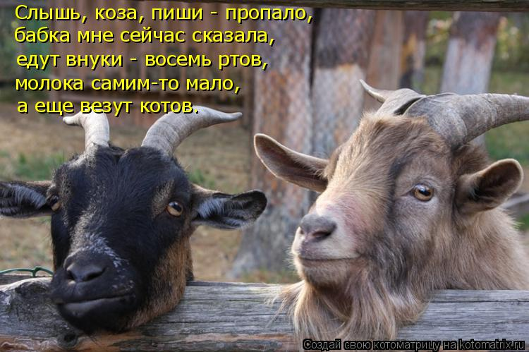Фото рисунки, прикольные картинки с надписями коза