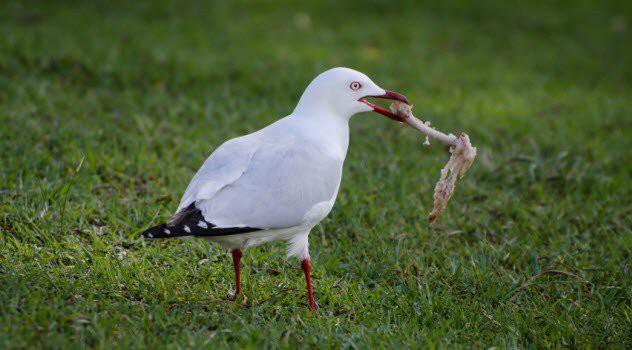 Как птицы потеряли свои зубы загадки, природа