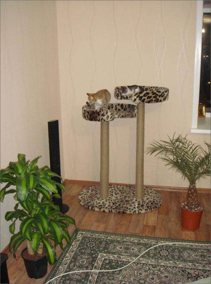 Полки на стену для кошек фото паху мужчин