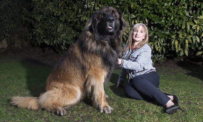 Большие собаки снова в моде