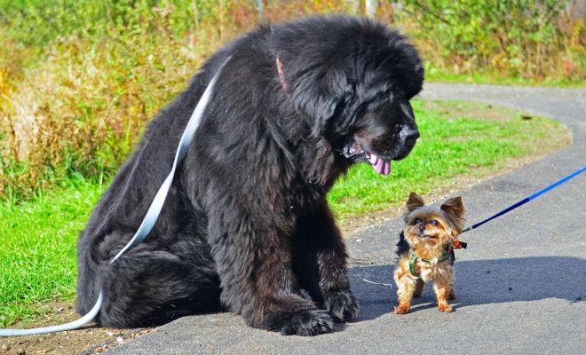 5 самых добрых собак мира: заводить для охраны бесполезно