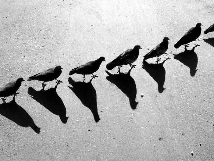 Мир теней: сюрреалистические работы российского фотографа Алексея Меньшикова