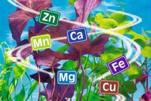 Ученые доказали, дефицит этих минералов приводит к мигрени, усталости и не только