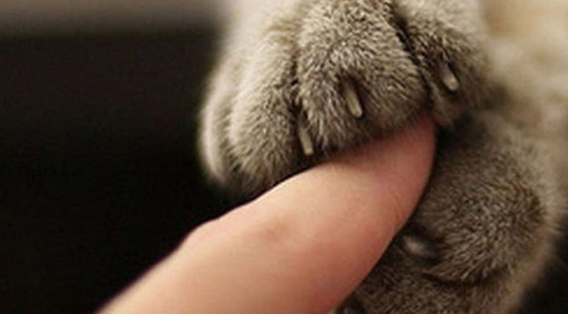 Примеры того, как кошка пока…
