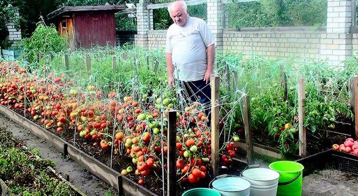 Секретики садоводам-огородни…