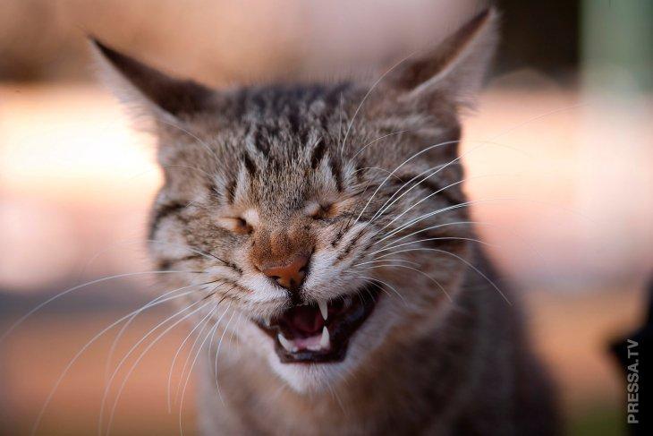 Смешные истории про кошек