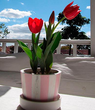Красные тюльпаны на 14 февраля символизируют чистую любовь