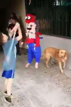Кто придет на помощь в трудную минуту, как не собака?  Пес спас праздник мальчика и угостил всех конфетами
