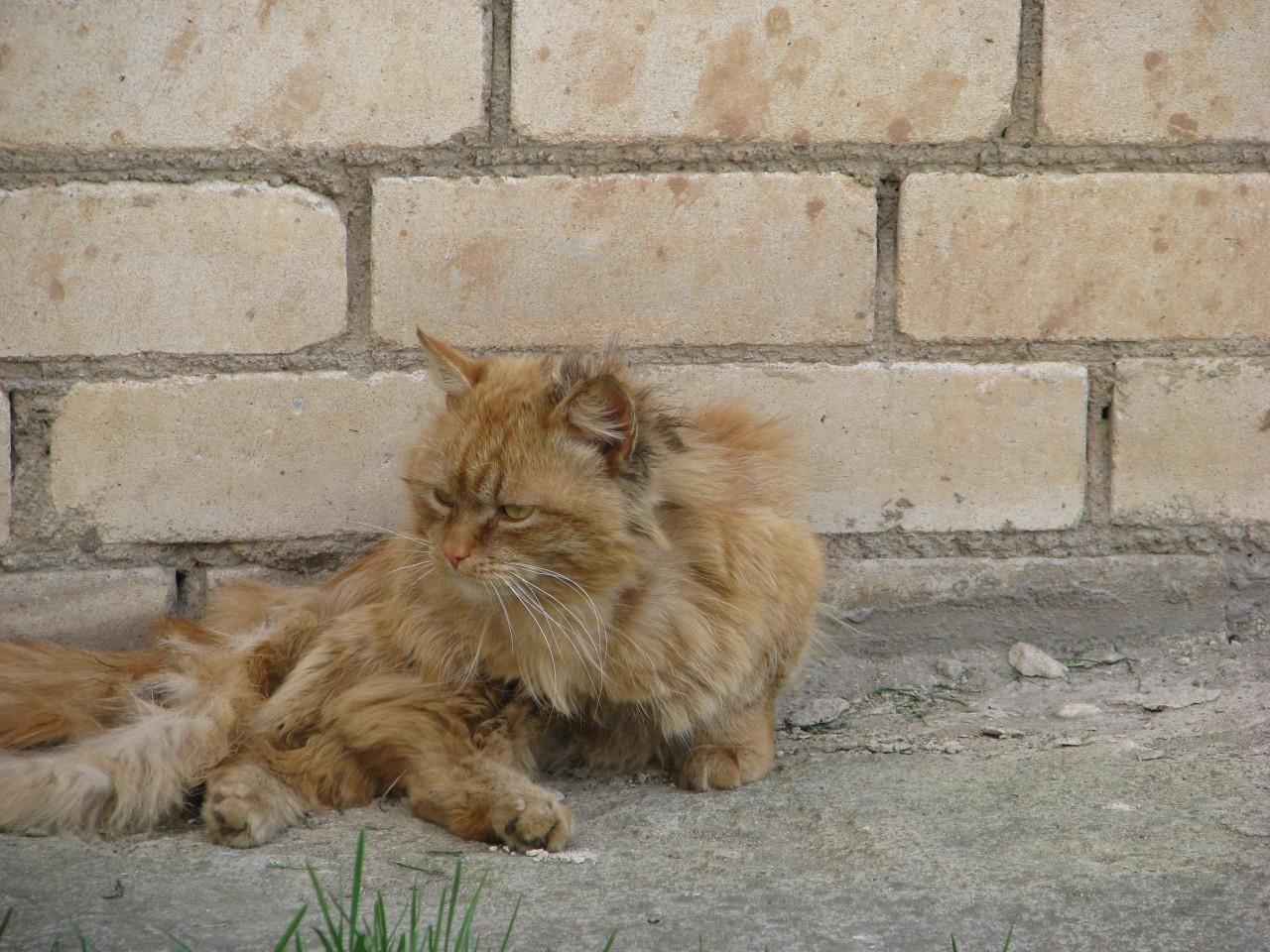 Братья наши меньшие: кто кому нужен: так кошка человеку или человек кошке?