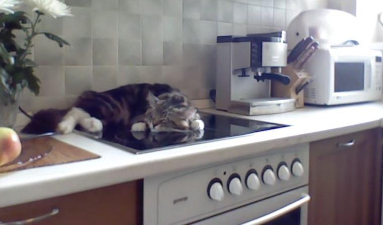 Котик Никифор разлегся на плите и недовольно огрызается