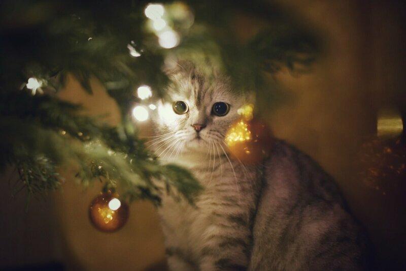 Манит елка, игрушки, кот, новый год, разбой