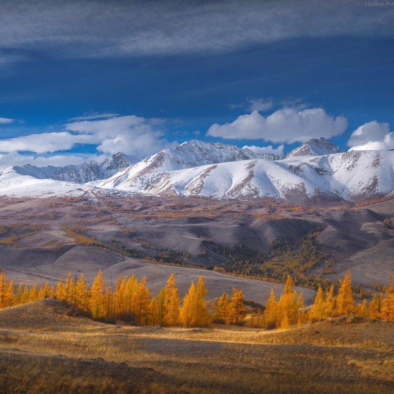 Осень у Курайского хребта, Алтай горы, леса, природа, природа России, российская природа, россия