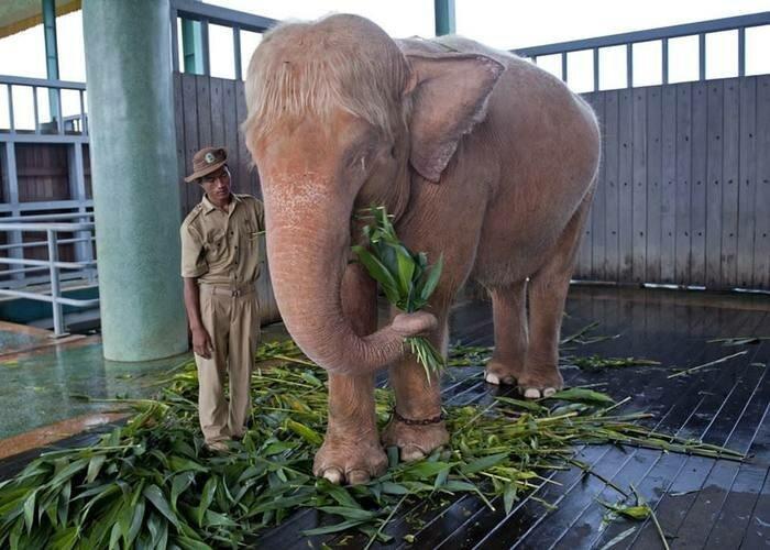 Слон альбинос позитив, фото, это интересно