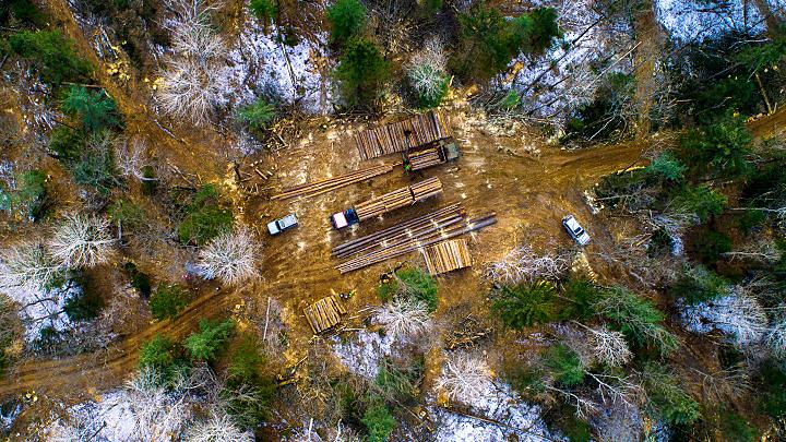 Кто вырубает русский лес? Часть 1: Залысины на таёжном ковре