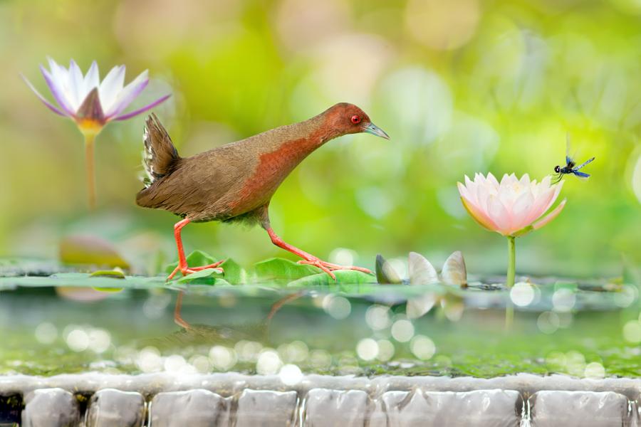 ~ A Happy Summer ~, автор — FuYi Chen на 500px.com