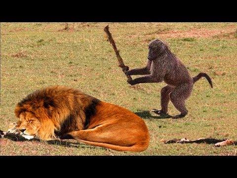 Десять случаев странного поведения животных