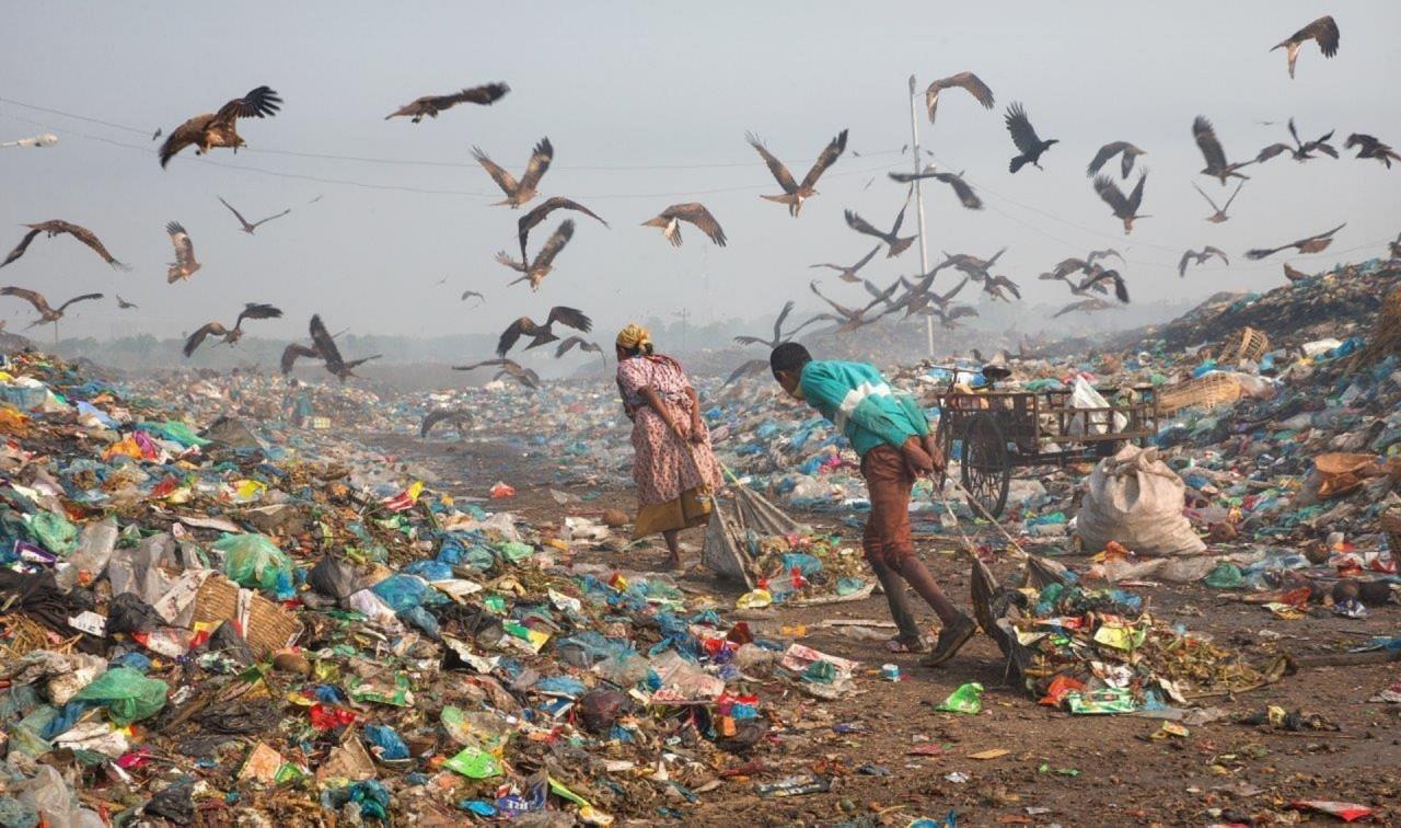 """""""Жизнь в мусоре"""", М. Юсуф Тушар, Бангладеш. Участник шорт-листа искусство фотографии, окружающая среда, охрана природы, победители конкурса, фотоконкурс, фотоконкурсы. природа, экологические проблемы, экология"""