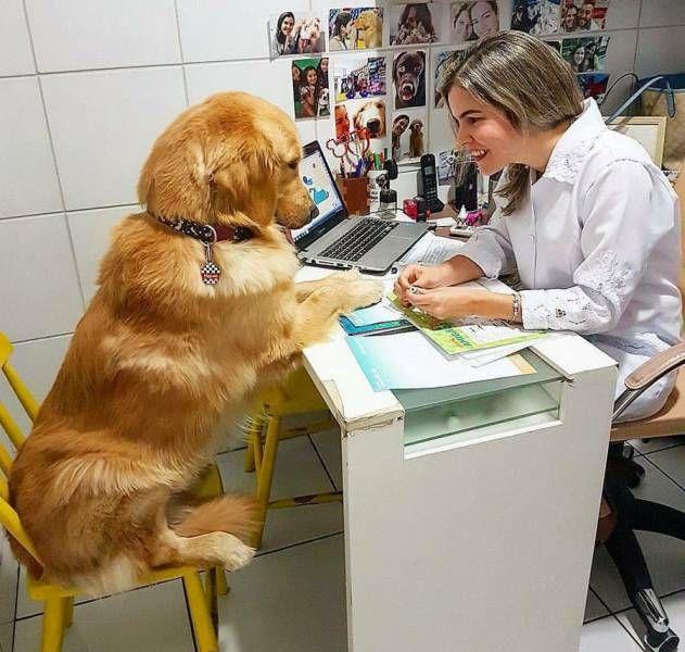 Приколы с ветеринарами картинки