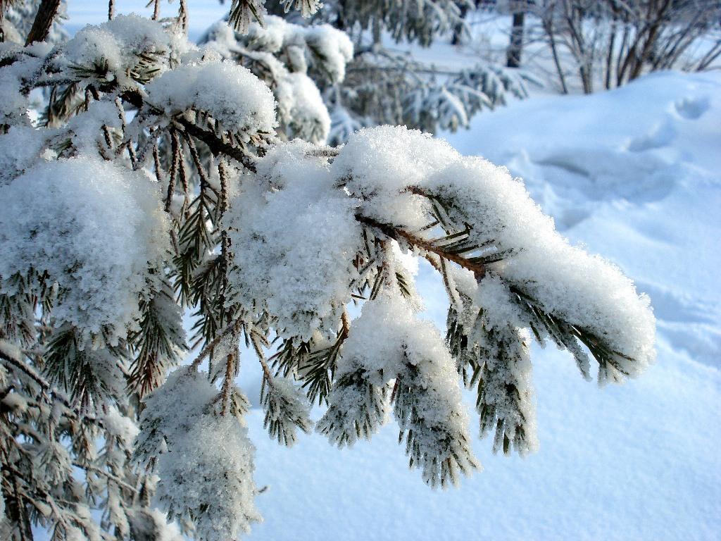 картинка белый снег пушистый овощей фруктов