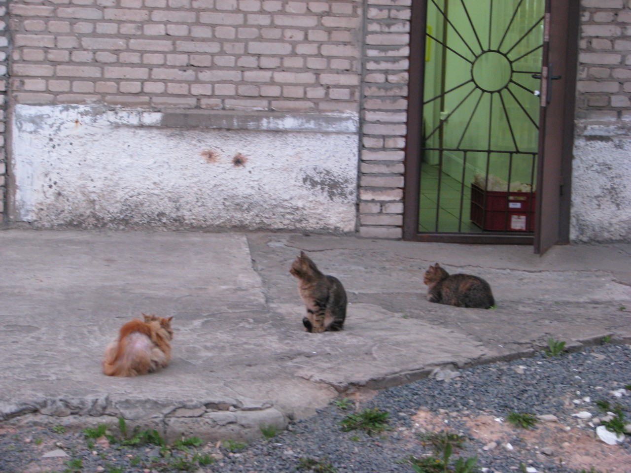 Братья наши меньшие: вот такой рацион кота!