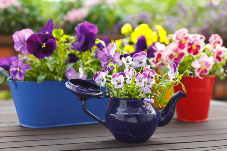 Очаровательные мини-сады - лучшее украшение для вашего дома.