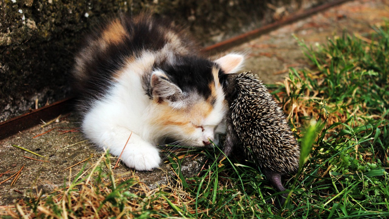 Котенок и ёжик. Два лучших друга.