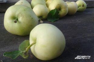 Почему на прилавках до сих пор нет яблок из Подмосковья?