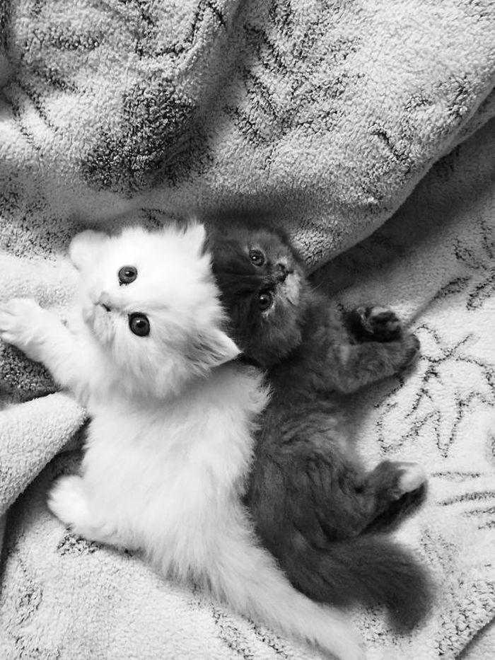 25 чёрных и белых котиков, к…
