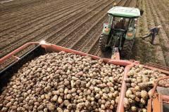 Нижегородская область— лидер пообъемам площадей картофеля вПФО