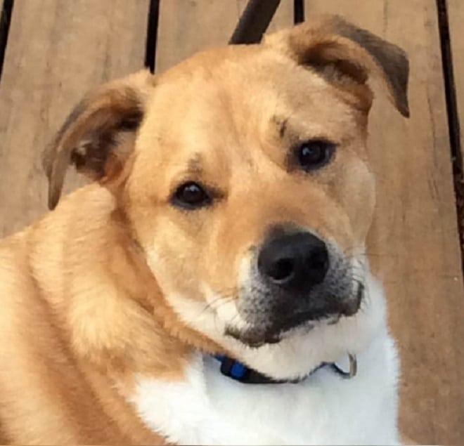 Затравленного школьниками мальчика спас пес, которому самому пришлось в жизни несладко