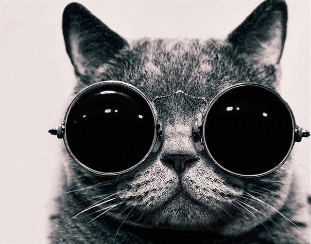 20. Бинокулярное зрение у кошек животные, коты, факты
