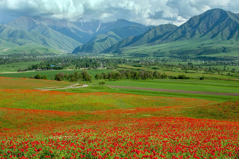 6. В Кыргызстане распространено около 70 видов этого цветка art, Кыргызстан, пейзаж, ссср, факты