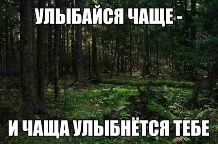 Картинки с надписью иди в лесу