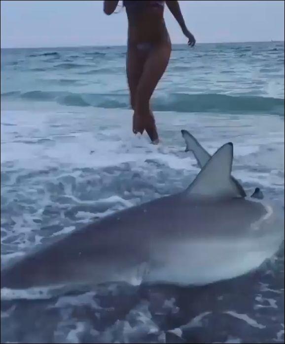 Спасительница акул