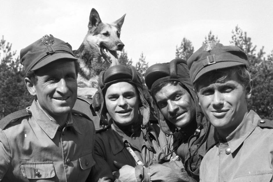 6 собак, отличившихся в годы Великой Отечественной войны