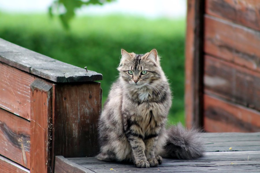 Страшилище по имени Шуня животные,Истории из жизни,отношения,позитив