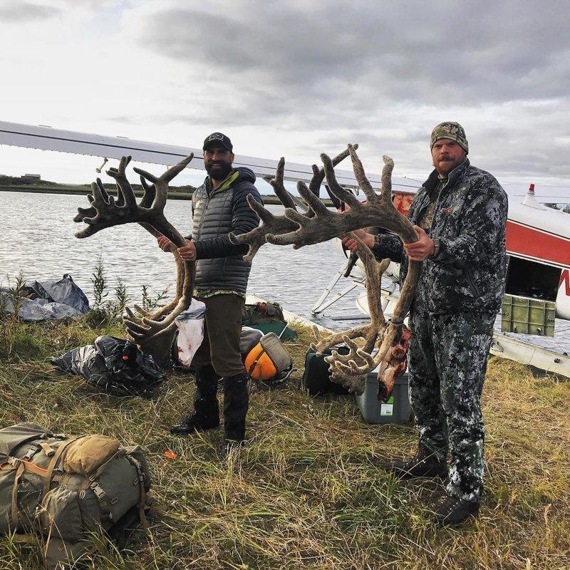 Охота удалась аляска, жизнь, лось, медведь, путешествие, сова