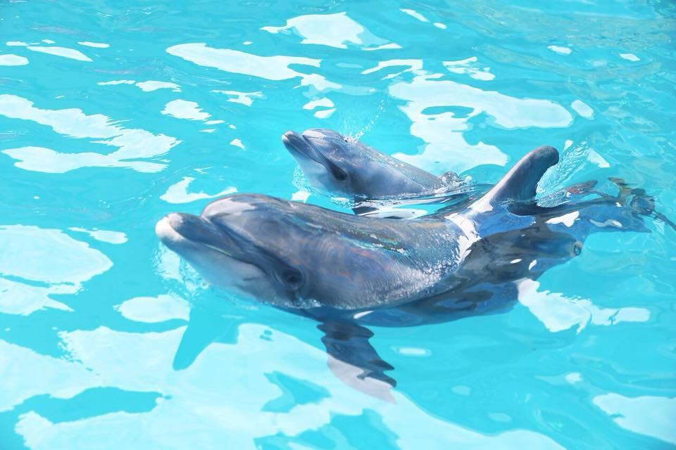 В дельфинарии во время предс…