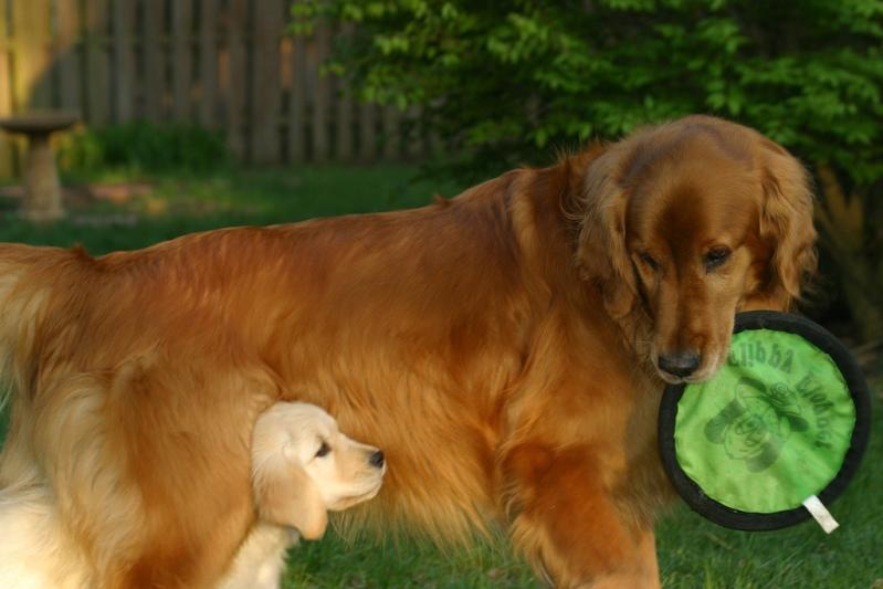 Самые умные породы собак. Топ-26 домашние животные,интересное,рейтинг,собаки