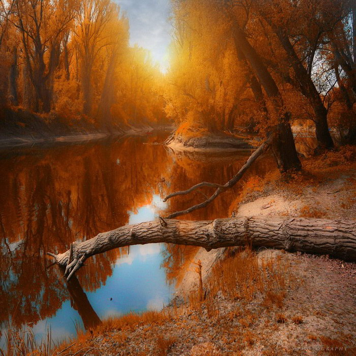 Невероятный роскошный лес в фотографиях Ildiko Neer