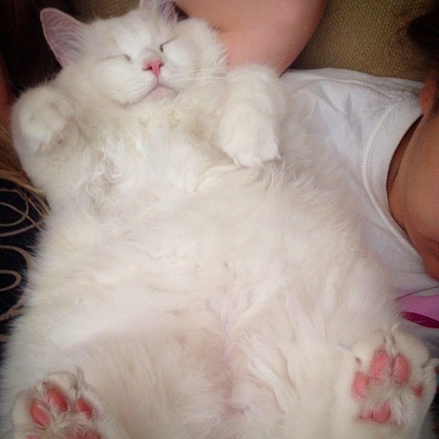 Котенок, найденный на дороге, оказался невероятно пушистым котенок, пушистость, спасение