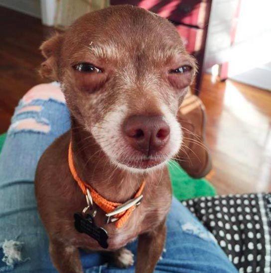 Собаки, которые укусят вас, если вы не дадите им вкусняшек