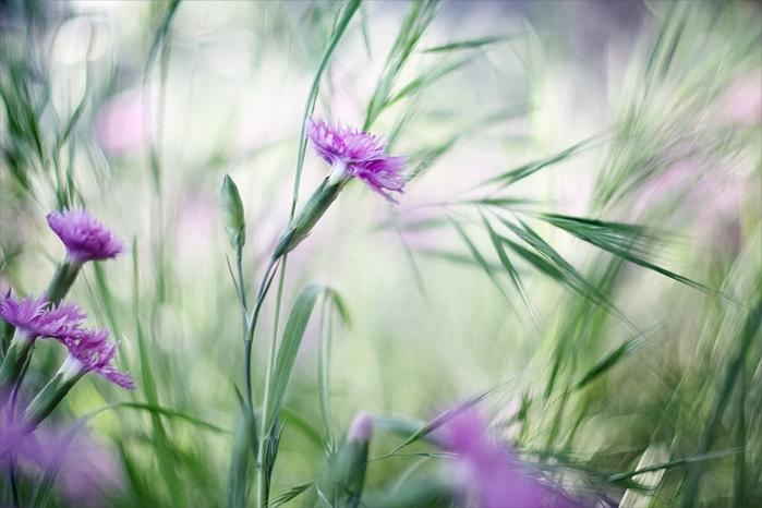 В миражах цветочных...